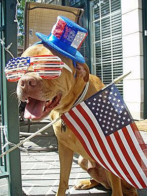 San Marcos CA Dog Walker's Tips For Fireworks Anxiety