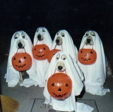 Dog dressed as ghosts