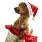 Christmas pet safety tips