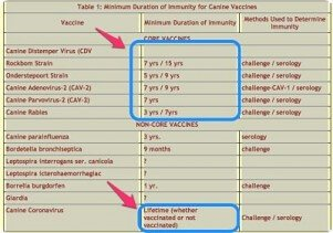 You are currently viewing Vaccine duration: how long does immunity last?