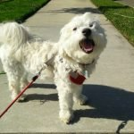 Read more about the article San Marcos CA Pet Sitter offers Untimed pet siting