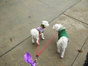 Dog Walking, Call 760-683-walk to get started!