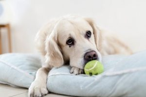 Holistic options to prevent canine cancer