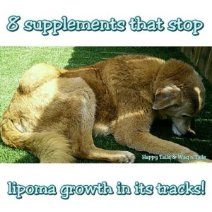 3 Natural remedies to reduce dog lipomas or benign tumors