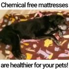 Chemicals in your mattress may hurt your pet's health