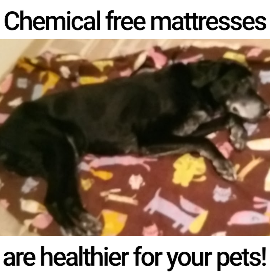 Chemicals in your mattress may hurt your pet's health​