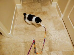 Bailey playing with string
